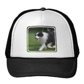 Perrito lindo del border collie gorras