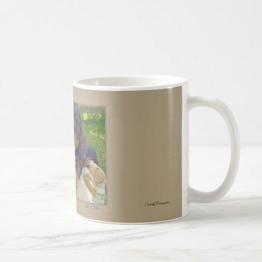 Perrito lindo del Dachshund Tazas De Café