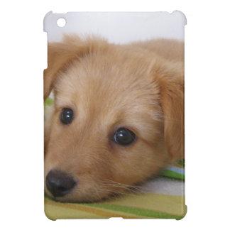 Perrito lindo del golden retriever iPad mini carcasas
