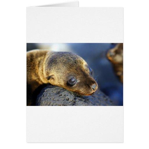 Perrito lindo del león marino tarjeta de felicitación