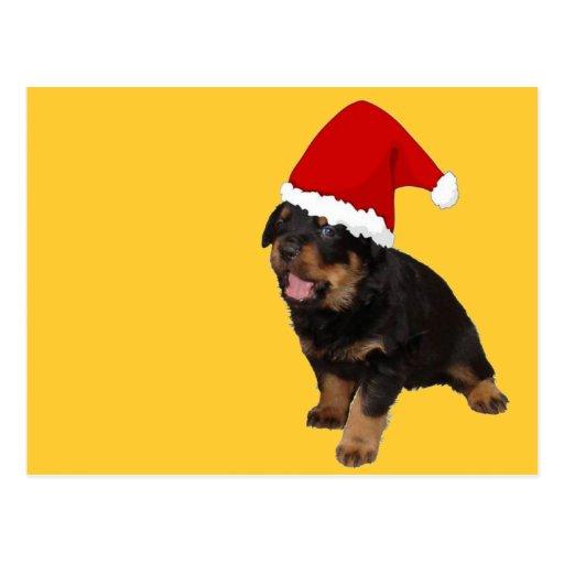 Perrito lindo del navidad