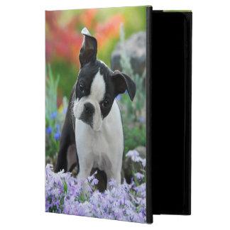 Perrito lindo del perro de Boston Terrier,