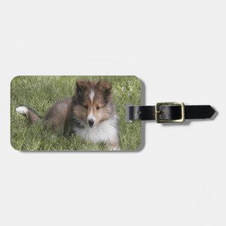 Perrito lindo del perro pastor de Shetland que mie Etiquetas Maletas