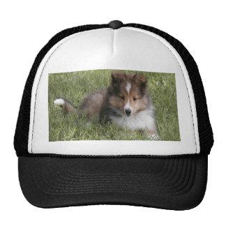 Perrito lindo del perro pastor de Shetland que mie Gorras