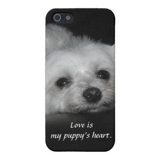 Perrito maltés cariñoso adorable iPhone 5 fundas