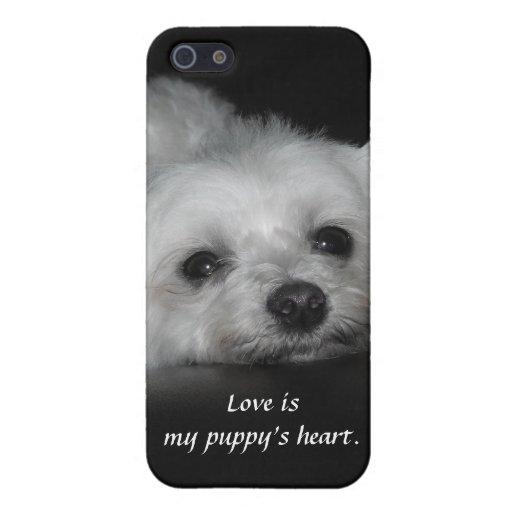 Perrito maltés cariñoso adorable iPhone 5 carcasa
