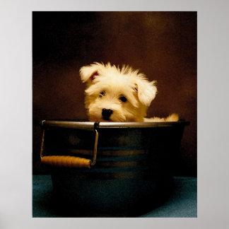 Perrito maltés en el baño póster