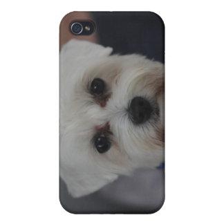 Perrito maltés iPhone 4/4S carcasas