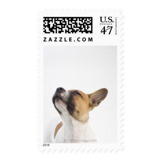 Perrito mestizo sello postal