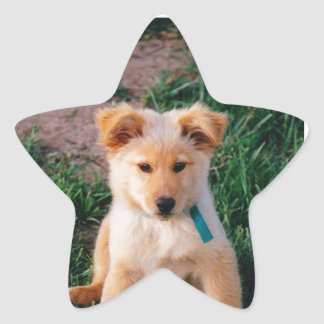 Perrito mezclado adorable de la raza pegatina en forma de estrella