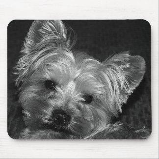 Perrito Mousepad de Yorkshire Terrier del amor Tapete De Ratones