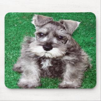Perrito Mousepad del Schnauzer miniatura