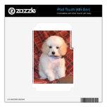 Perrito mullido blanco del caniche de juguete iPod touch 4G skins