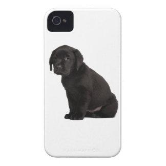 Perrito negro de Labrador iPhone 4 Protectores