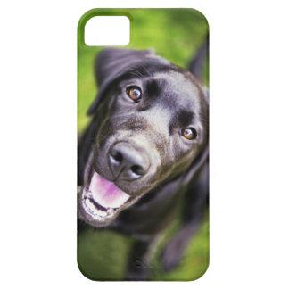 Perrito negro de Labrador que mira hacia arriba, p iPhone 5 Cárcasa