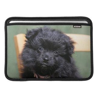 Perrito negro de Pomeranian Fundas Macbook Air