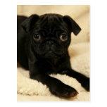 Perrito negro del barro amasado tarjeta postal