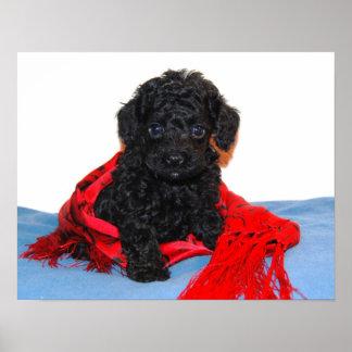 Perrito negro del caniche de juguete con la bufand impresiones