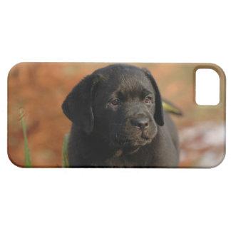 Perrito negro del laboratorio funda para iPhone SE/5/5s