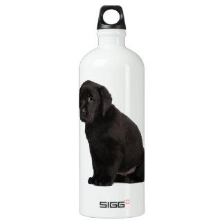 Perrito negro del labrador retriever