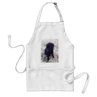 Perrito negro del labrador retriever delantal