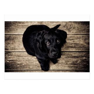 Perrito negro del labrador retriever en la madera postales