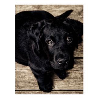 Perrito negro del labrador retriever en la madera tarjeta postal