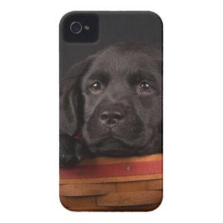 Perrito negro del labrador retriever en una cesta Case-Mate iPhone 4 cárcasas