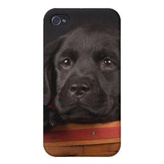 Perrito negro del labrador retriever en una cesta iPhone 4 carcasa