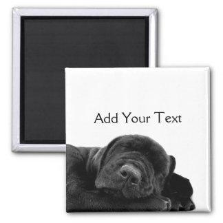 Perrito negro el dormir imán cuadrado