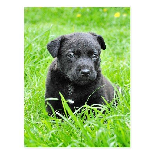 Perrito negro lindo que se sienta en hierba postales