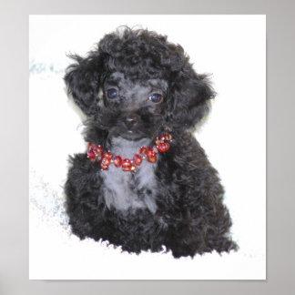 Perrito negro perfecto del caniche de juguete posters