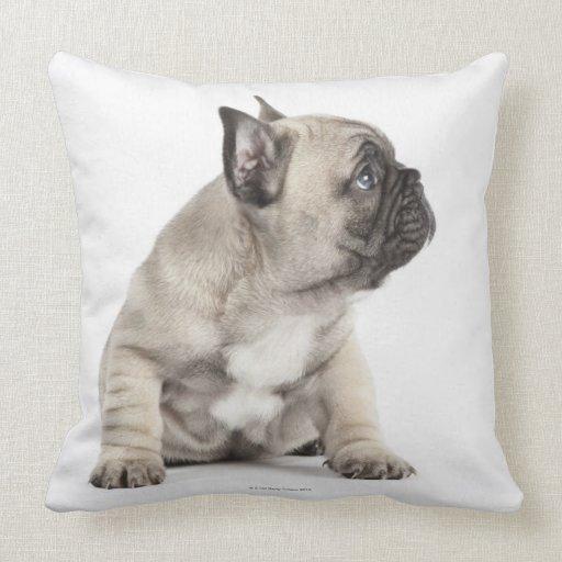 Perrito pedigrí almohada