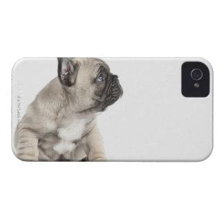 Perrito pedigrí Case-Mate iPhone 4 protector