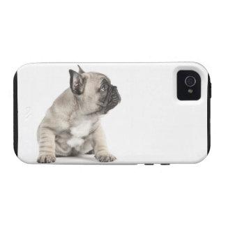 Perrito pedigrí vibe iPhone 4 carcasas