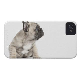 Perrito pedigrí iPhone 4 Case-Mate carcasas
