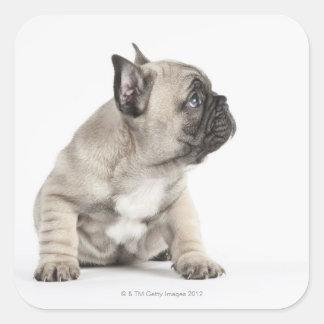 Perrito pedigrí calcomanía cuadradase