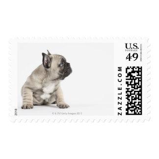 Perrito pedigrí sello