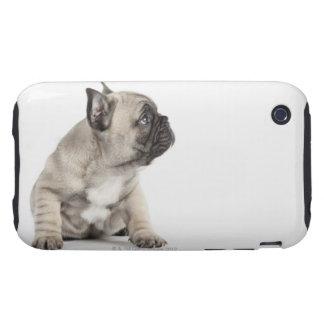 Perrito pedigrí tough iPhone 3 coberturas