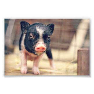 Perrito picazo del cerdo para los amantes del fotografías