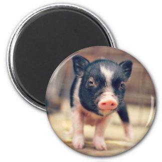 Perrito picazo del cerdo para los amantes del imán redondo 5 cm