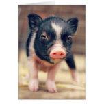 Perrito picazo del cerdo para los amantes del tarjeta pequeña
