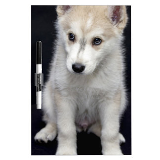 perrito pizarra blanca