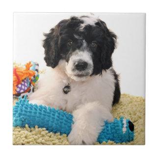 Perrito portugués del perro de agua con los juguet azulejo cuadrado pequeño