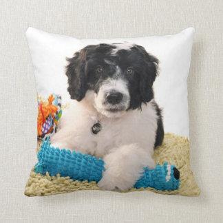 Perrito portugués del perro de agua con los juguet almohada