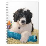 Perrito portugués del perro de agua con los juguet cuadernos