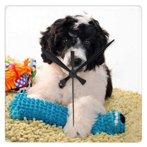 Perrito portugués del perro de agua con los juguet relojes