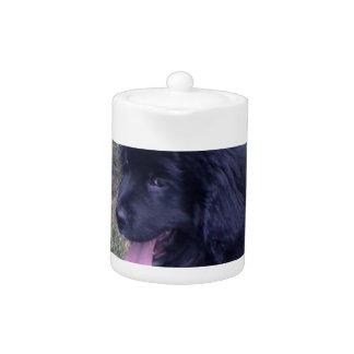 Perrito precioso de Newfie raza del perro de Terr