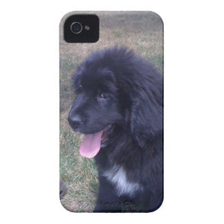 Perrito precioso de Newfie (raza del perro de Terr iPhone 4 Cobertura