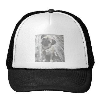 Perrito precioso del barro amasado en blanco y neg gorras de camionero